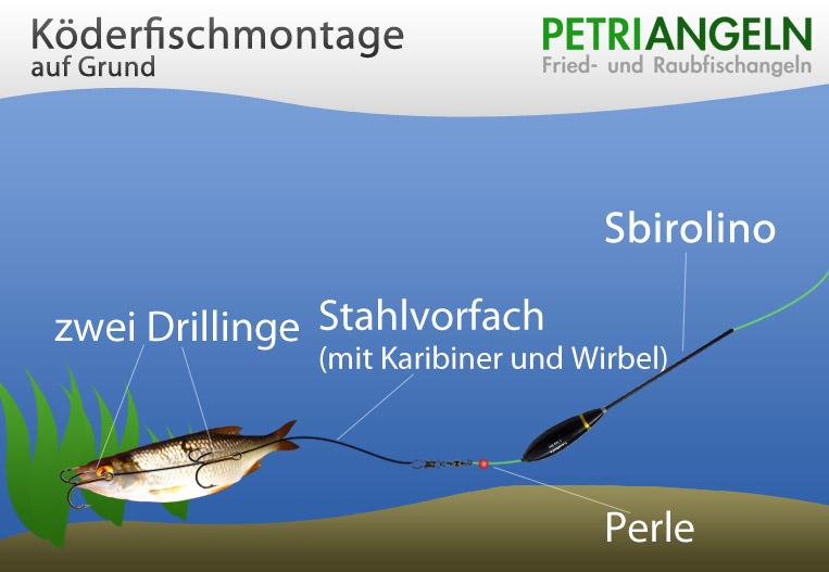 anhieb beim sbirolino angeln