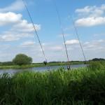 Karpfenangeln an der Aller - drei Karpfen beim Flussangeln