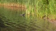 Achtung Wasservogel