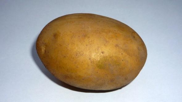Kartoffelköder
